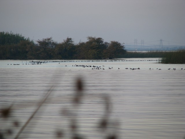 Waterfowl at Big Break - Photo by Megan Romick