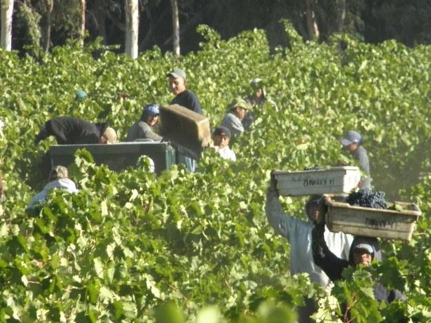 oakley harvest