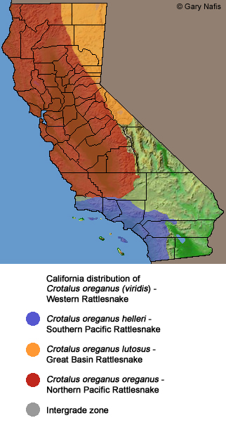 Rattlesnakes In California Map Rattlesnake bites are on the rise in California. Here's what to do